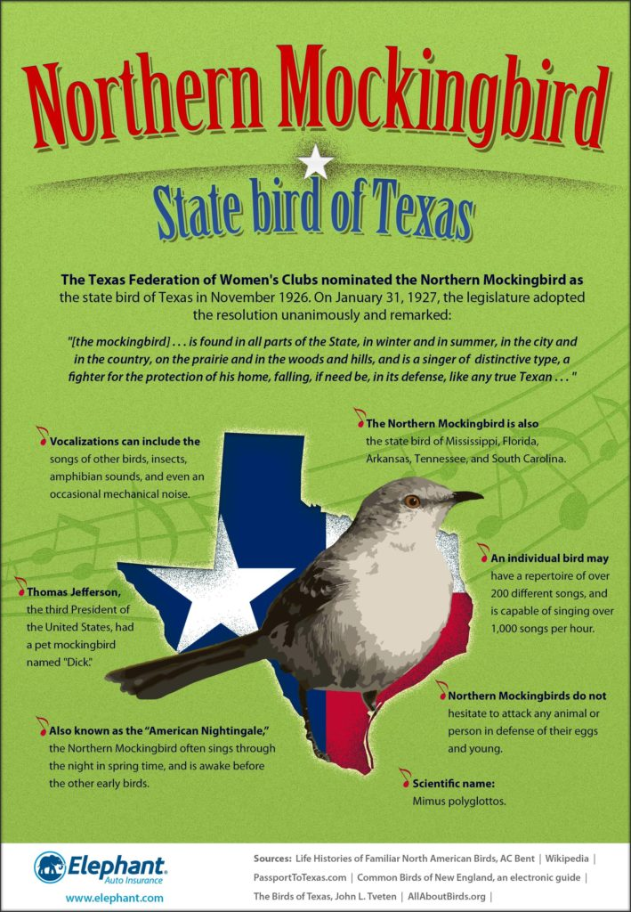 State Bird of Texas Infographic
