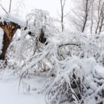 Heavy, wet snow from blizzards often results in power outages.