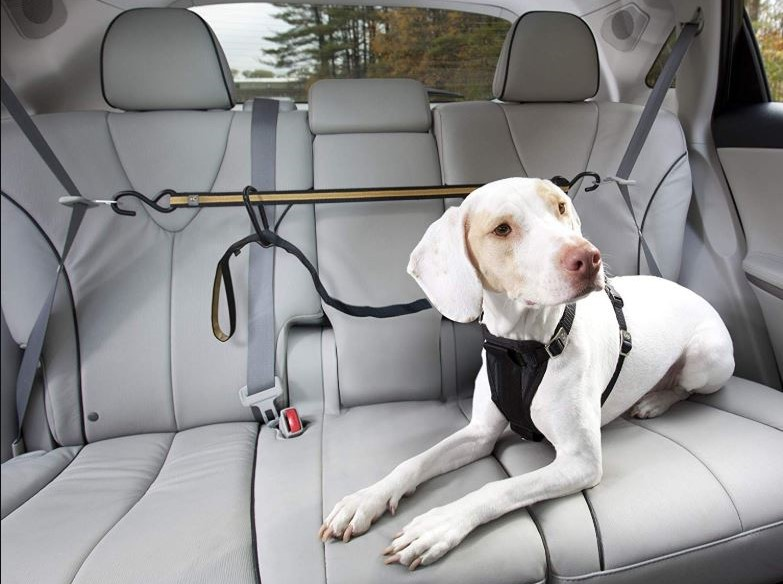 What to Do in An Accident with Your Pet